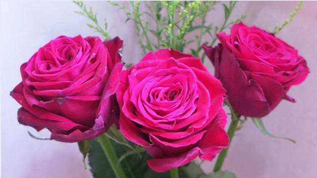 rose 赤いバラ 3