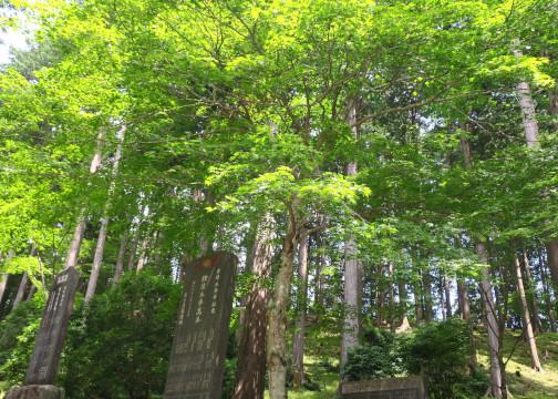 三峯神社 境内